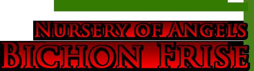 Hodowla psów rasowych – Nursery of Angels Bichon Frise